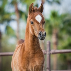 RD Halyr filly-211 fin