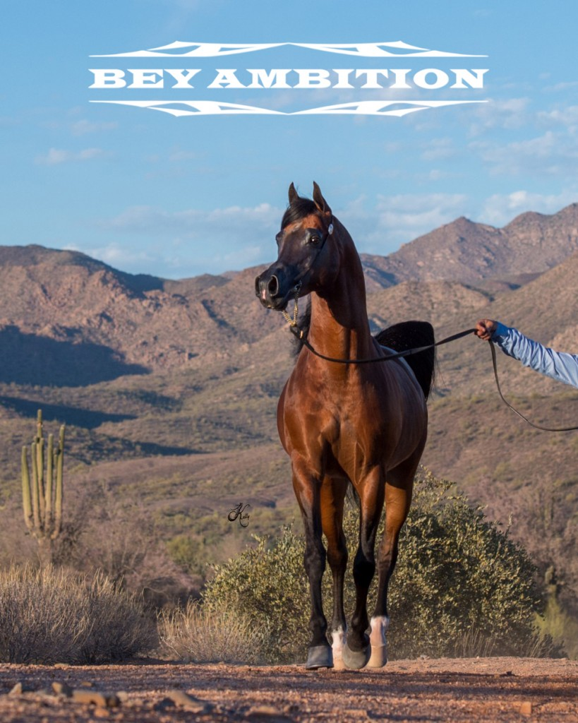 Bey-Ambition-landscape-109-fin-cropped-1-e1529508025157