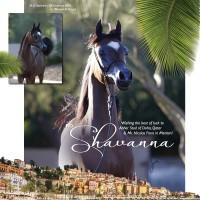 U7A0860-Shavanna--e1612839934284 copy